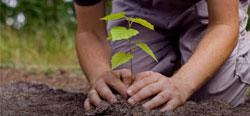 Szenzációs civil kezdeményezés: 10 millió fa