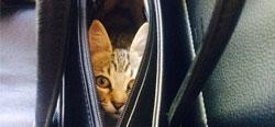 Állati csomagolás