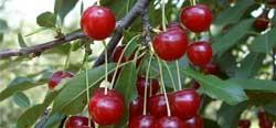 Ne dobd ki a gyümölcsmagot