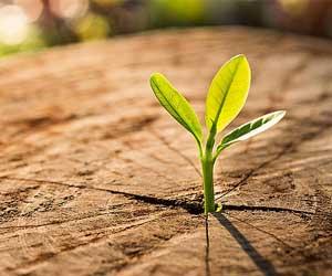 Vissza a természethez I. Avagy, a körforgásos gazdaság