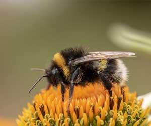Miért olyan fontosak a méhecskék?